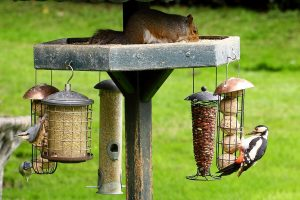 Birds and squirrel on a Feeder pole image