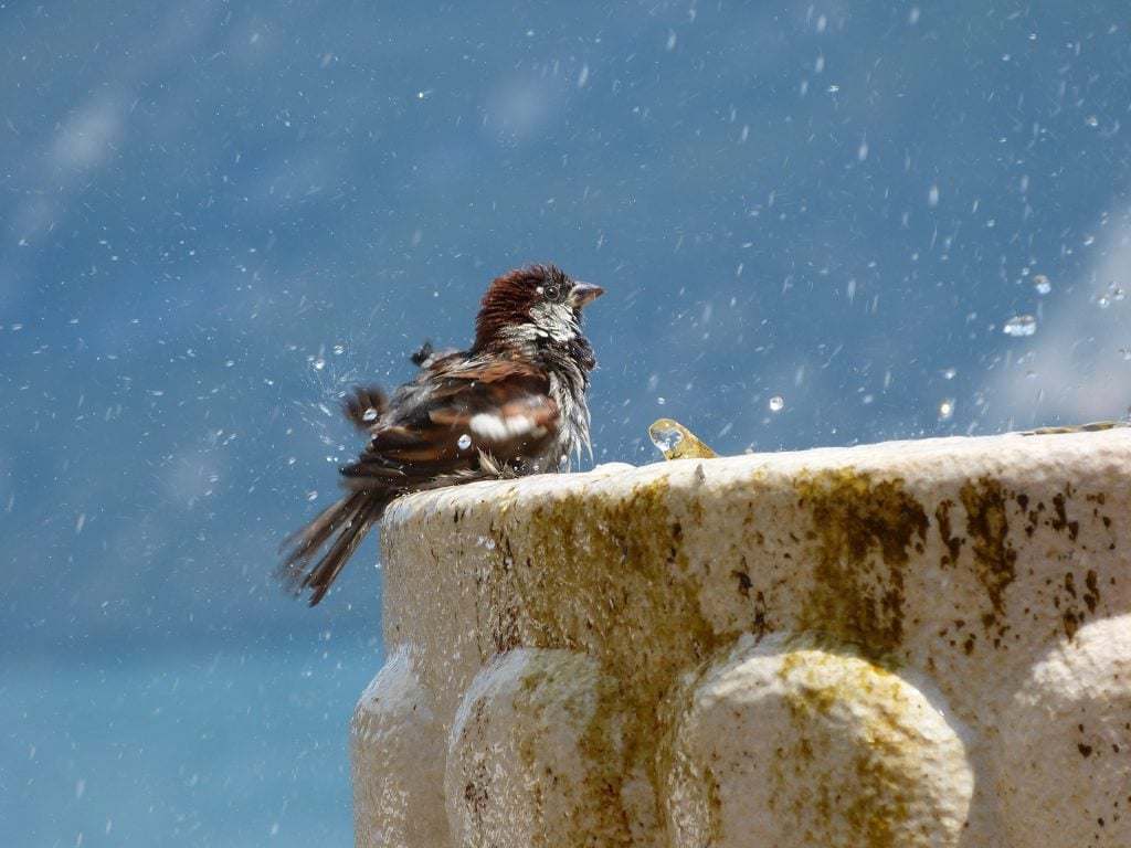 bird on a fountain