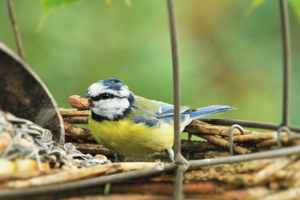 bird seed featured image