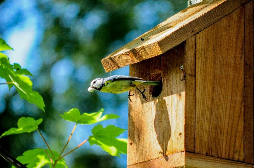 A bird perched on a wooden birdhouse