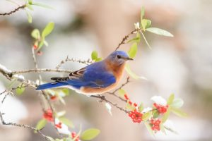A bluebird perched on a branch