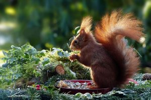 squirrel on a plate