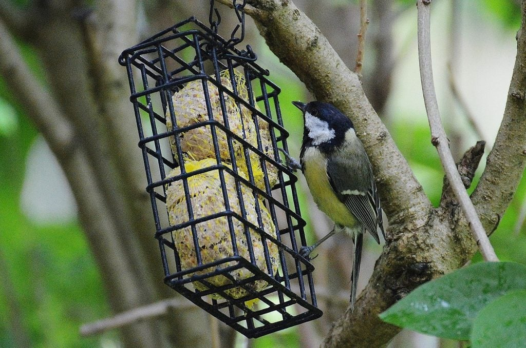 a colorful bird on a suet feeder