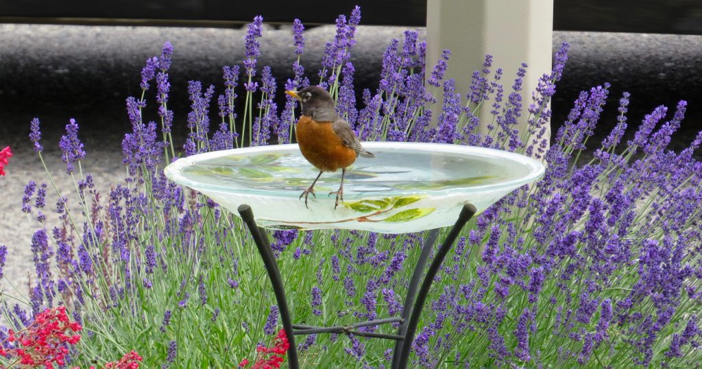 heated bird bath featured image